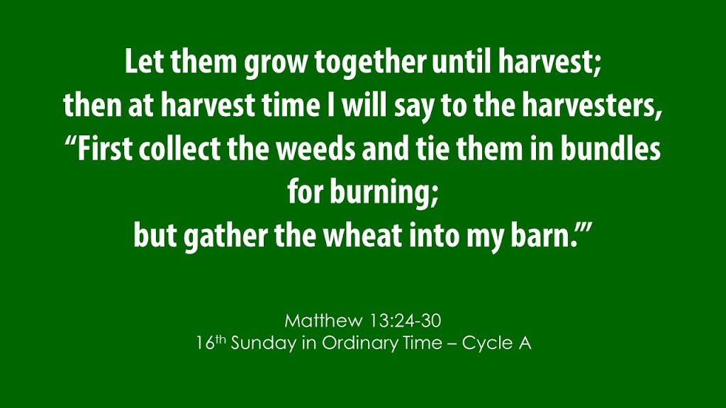 Sixteenth Sunday in Ordinary Time – July 19, 2020